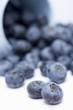 Blueberries falling out of an upset beaker
