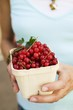 Hands holding cardboard punnet of redcurrants