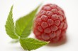 A raspberry with leaves (close-up)