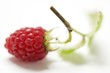 A raspberry with twig and leaves (close-up)