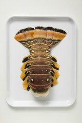 Slipper lobster on white platter