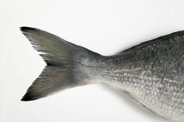 Gilthead bream (tail)