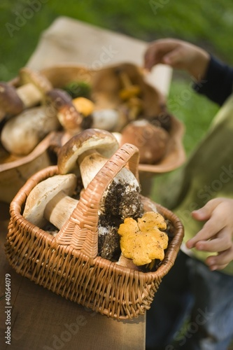 Small boy with baskets full of mushrooms in a wood