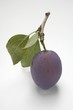 Plum with stalk and leaves