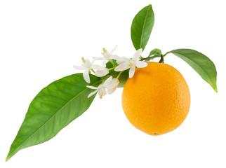 Orange on a branch with leaves and a flowers