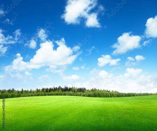 Grasfeld und perfekter Himmel