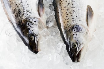 Tasmanian salmon on ice