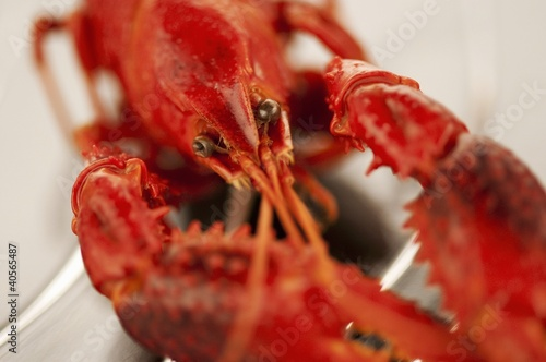 Cooked freshwater crayfish (close-up)