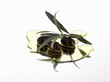 Black olives and olive sprig in olive oil