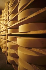 Cheeses in maturing cellar