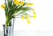 Daffodil still life growing in metal pots