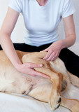 Canine Massage poster