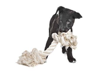 Mixed breed puppy