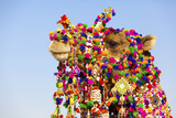 Decorated camel at the Desert Festival, Jaisalmer