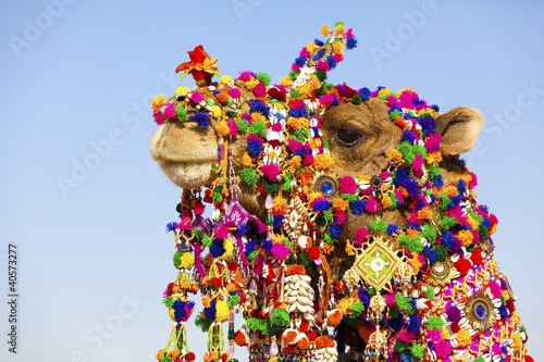 Decorated camel at the Desert Festival, Jaisalmer