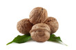 Walnuts are a bunch of illuminated from behind