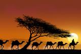 Caravane et arbre au couchant - 40577085