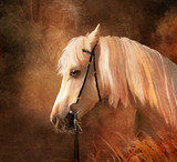 Fototapety Horse portrait. Simulation of old oil painting style