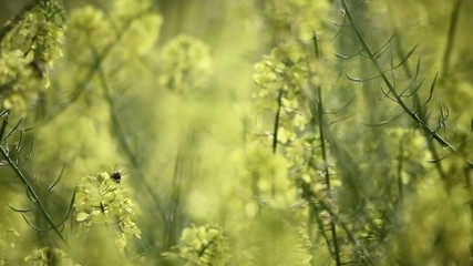 Green and yellow flowers with bee