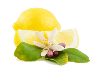 Lemon and flower