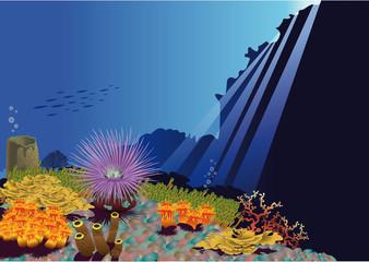 Fondo de mar