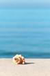 Strandurlaub, Fernweh, Sommer, Reisezeit, Meeresschnecken