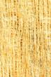 Close Up of Tree Bark Fibers
