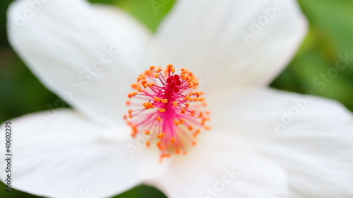 Macro View of Tropical Flower