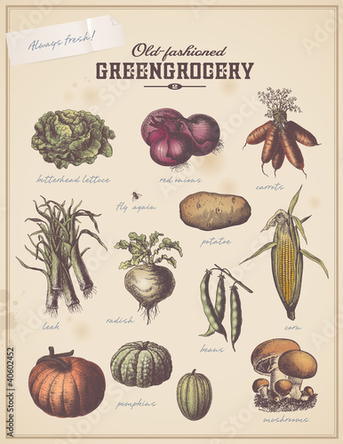 vintage greengrocer's placard with different vegetables (2)