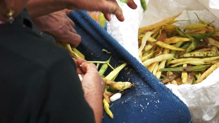 Peeling Beans in a Traditional Ecuador Market