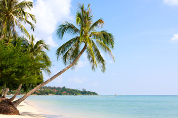 Beautiful palm tree over white sand beach