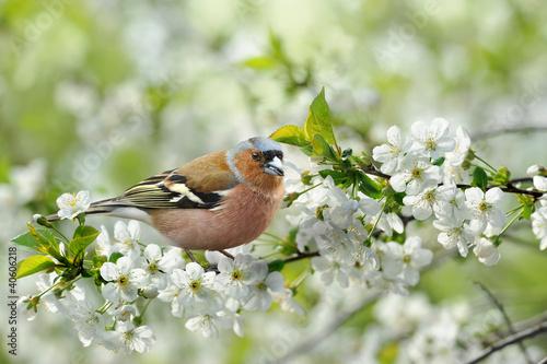 Frühling 115