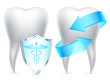 Two teeth protected by shield and arrows.