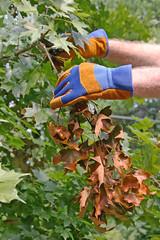 Removing a Dead Branch