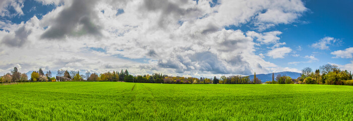 Field, Cloud and Sky