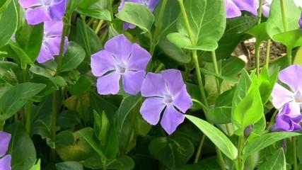 Aiuola fiorita