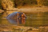 Fototapete Fluß - Afrika - Säugetiere
