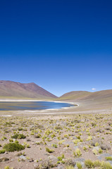 Miniques Lagoon in Altiplano Chile