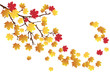 vector tree branch in fall