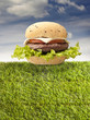 sandwich with amburger on the grass