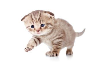 baby kitten first step