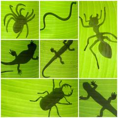 insectes sur feuille de bananier
