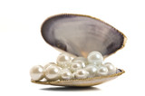Beautiful pearls in a seashell
