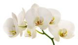 Fototapete Weiß - Bramkofel - Blume