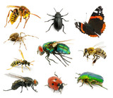 Set of insects - Fine Art prints