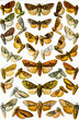 butterfly collection in white background
