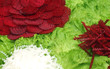 Background of Beet Radish and Lettuce