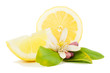 Lemon with a flower and leaves
