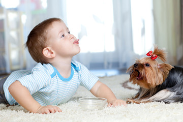 adorable child feeding yorkshire terrier dog  at home