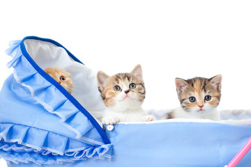 three sweet kittens in baby carriage